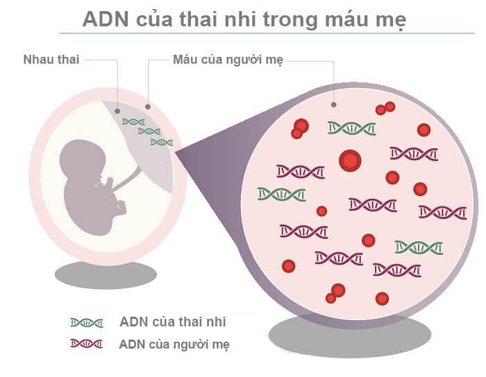 Xét nghiệm ADN thai nhi cần nhiều công nghệ di truyền chuyên sâu
